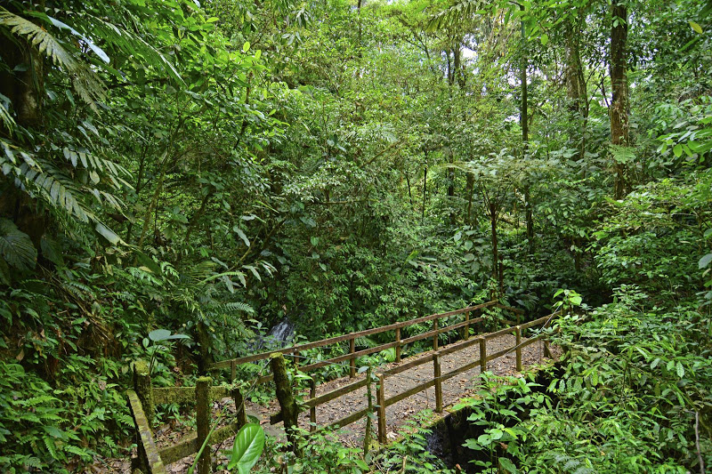 Forrest at Chachagua Costa Rica Eco Lodge