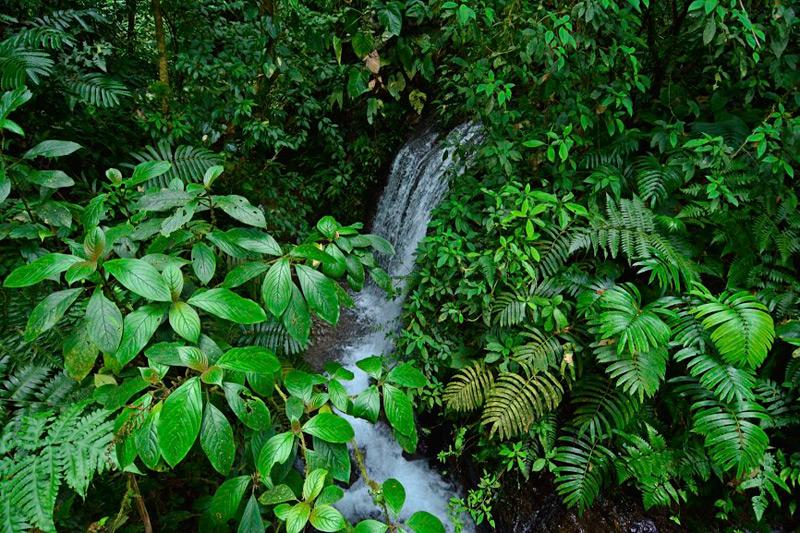 Waterfall at Chachagua Costa Rica Eco Lodge