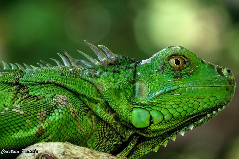 Costa Rica Rainforest Hiking Trails