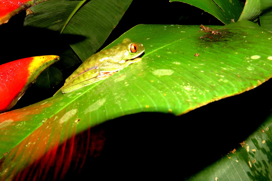 Costa Rica Rainforest Night Hike